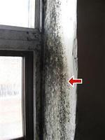 mould beside window